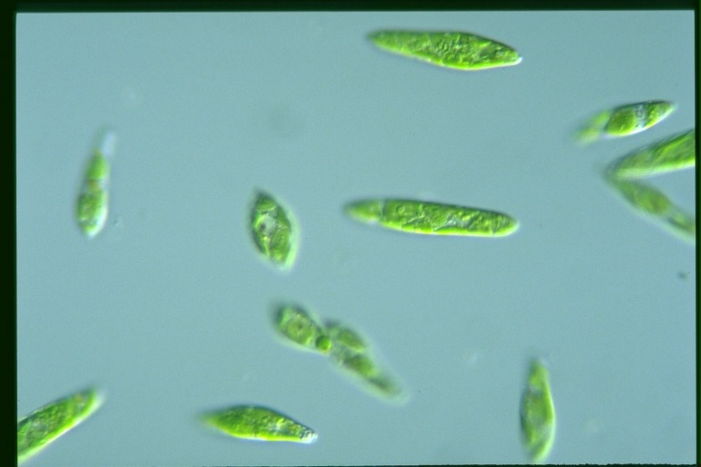 Chap 9 protists and fungi protists and fungi ccuart Images