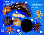 Mollusks, Arthropods and Echinoderms
