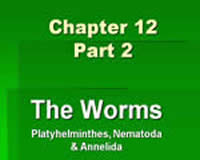 Part 2: The Worms